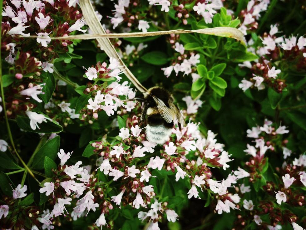 Bumble bee buddy