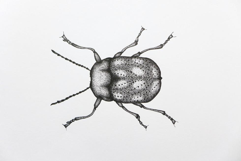 красивые рисунки жуков этом случае следует